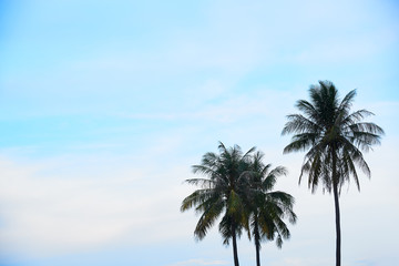 Three coconut trees and blue sky background