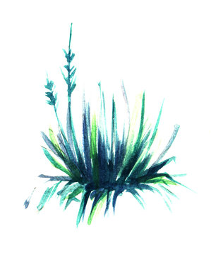 Magnificent spherical bush of grass or palm yucca or beshorneriya. Hand-drawn watercolor sketch illustration