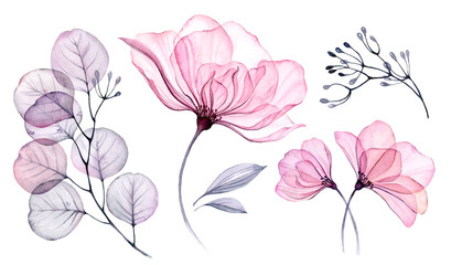 Transparent watercolor floral set bundle of roses, bellflower, buds, leaves, branches in pastel pink, grey, blue, violet, purple color vintage ornament, x-ray, wedding design, stationery print, frame  Wall mural