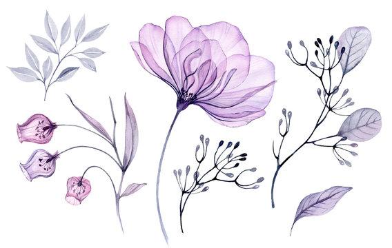 Transparent watercolor floral set bundle of roses, bellflower, buds, leaves, branches in pastel pink, grey, blue, violet, purple color vintage ornament, x-ray, wedding design, stationery print, frame