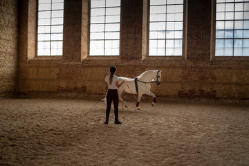 white horse training in a stable
