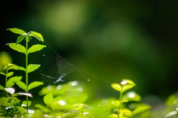 Spider web in green leaves, beautiful nature background
