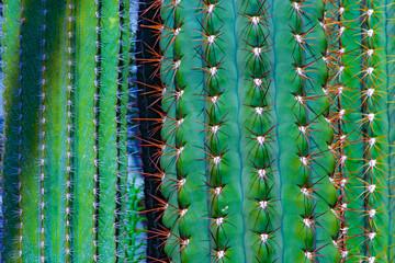 Poster Cactus germany,hambourg: cactus
