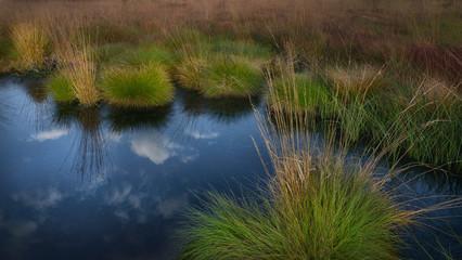Moorlandschaft mit Spiegelung