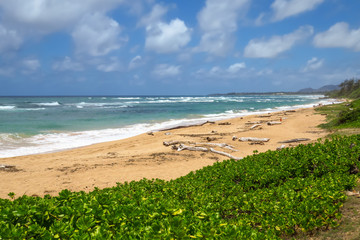 Wood on the beach at Lydgate Beach Park, Kauai, Hawaii, USA