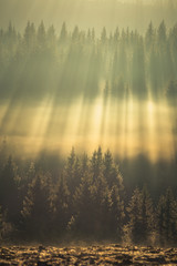 Amazing light rays above the forest.