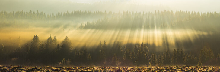 Amazing light rays above the forest. Fototapete