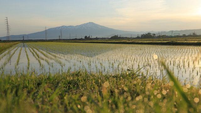 夜明けの庄内平野と鳥海山 Shonai-heiya and Mt.Chokai