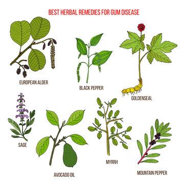 Best herbal remedies for gum disease