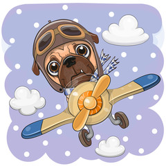 Cute Pug dog is flying on a plane