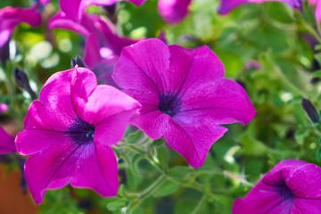 Fond de hotte en verre imprimé Hortensia Spring flowers in the nature