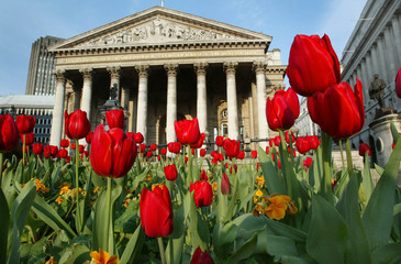 TULIPS IN FULL BLOOM STANDS OUTSIDE LONDON'S ROYAL EXCHANGE.