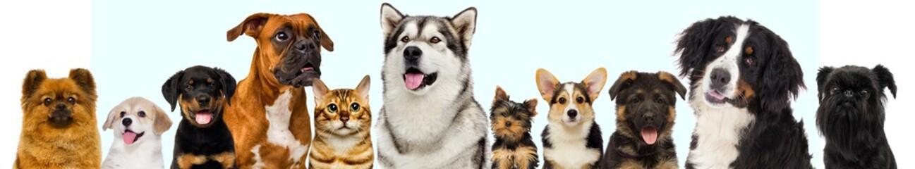 Fototapete - set of pets, dogs