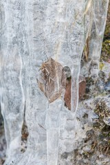 Brown autumn leaf trapped in ice with icicles in winter in Austria conceptual of the seasons and sub-zero weather