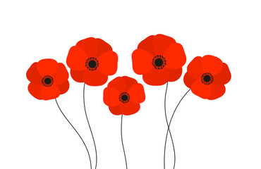 Obraz Red poppies flowers isolated on white background. - fototapety do salonu
