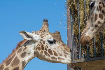 visiting the Zoo of Affi, near lake Garda,  italian Zoo, nature and wildlife