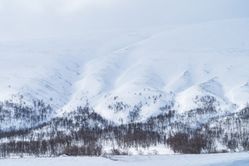 Forest and snow covered mountains in Swedish Lapland. (Sarek National Park)