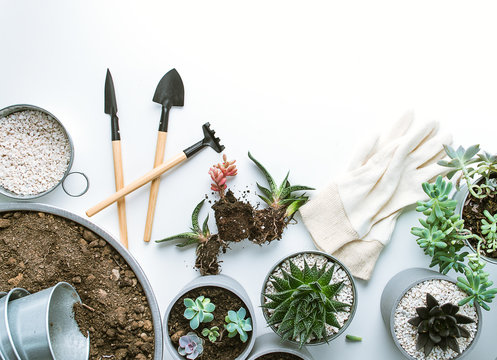planting of succulents