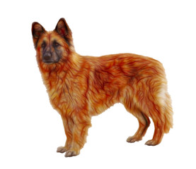 big beautiful redhead dog