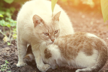Beautiful Cats in the Green Grass in Summer - Pets Care Concept