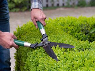 Gartenarbeit in der Freizeit - Hecke scheren