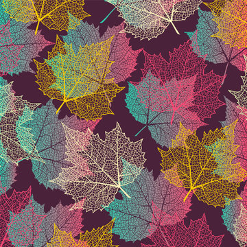 Colorful  background with maple leaves. Nature banner. Frame with plants. Template