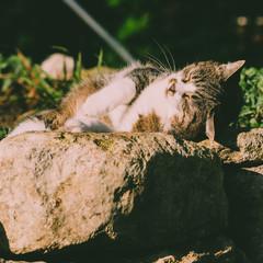 Die Katze im Garten