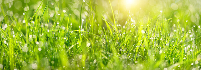 Abstract green grass nature landscape in summer sun with bokeh. Juicy green grass on meadow with drops dew in morning light in outdoors close up. Beautiful artistic image of purity freshness nature Wall mural