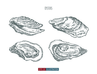 Hand drawn oysters isolated. Engraved style vector illustration. Template for your design works.