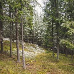 Waldviertel 2019