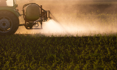 Tractor spraying pesticides at  corn field