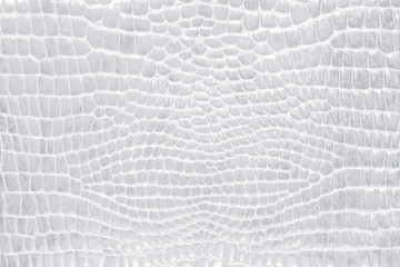 Crocodile skin gray, white, color, perfectly will be suitable for any design purposes. Rock texture. Nature background.