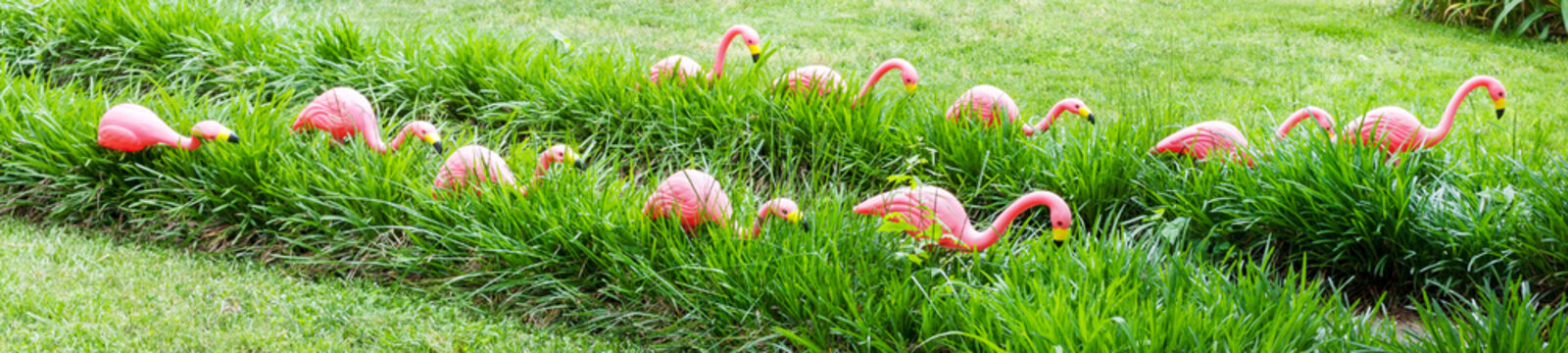 Tacky pink flamingos lining path leading to home.