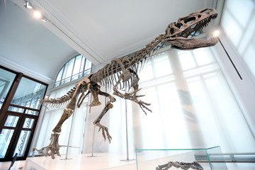 New dinosaur species Arkhane exposed at Natural Science Museum in Brussels