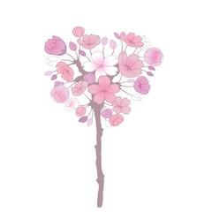 Pink sakura flowers isolated on white background
