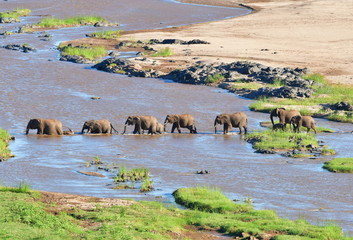 Garden Poster Elephant elephant crossing Olifant river in Kruger national park in SOuth Africa