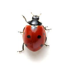 Fototapeta Ladybug isolated on white obraz