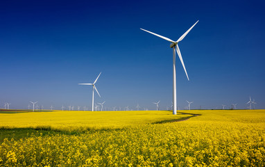 Wind turbines on fields with windmills in the Romanian region Dobrogea. Rapeseed field in bloom. Renewable energy. Protect the environment.