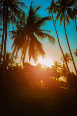 Wall Mural - Silhouette coconut palm trees near the beach at sunset.