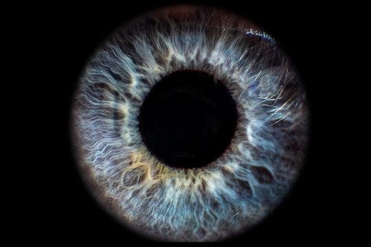 Iris Auge blau vor schwarzem Hintergrund