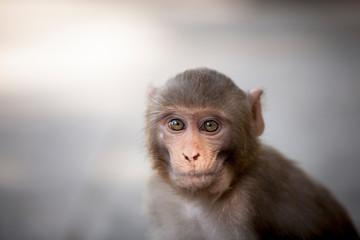 A young monkey at Swayambhunath, the Monkey Temple in Kathmandu, Nepal