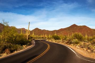 A highway through the desert surronded by cactus.