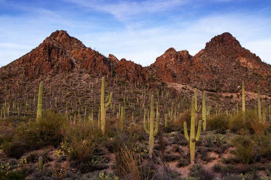 Mountains push up past saquaro cactus in the desert.
