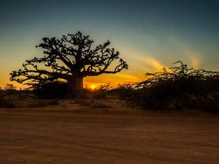 Poster Baobab Silhouette of baobab