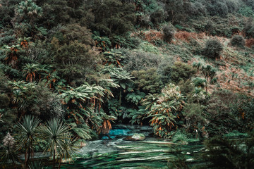 Tropical plants near fast river