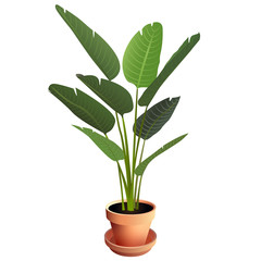 Bird of Paradise Houseplant in Terra Cotta Pot Isolated on White Background