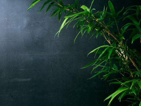 Bamboo leaves isolated on dark background
