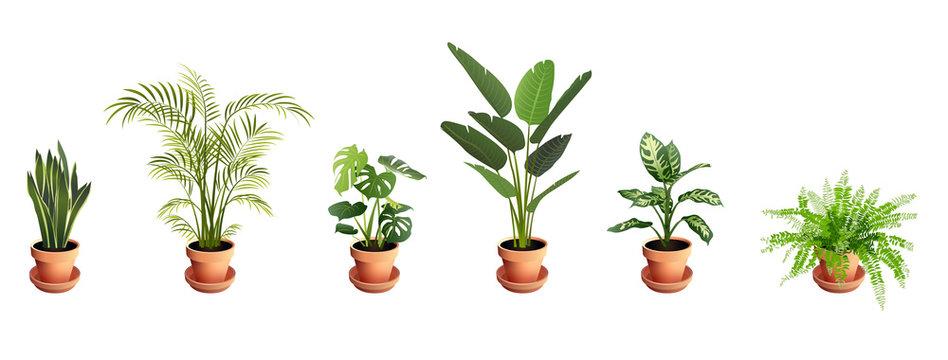 Set of Tropical Houseplants in Terra Cotta Pots