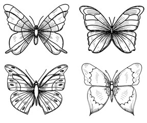 sketch butterflies, lines, set, collection