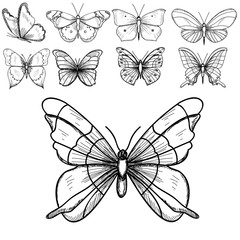 vector, isolated, sketch butterflies, lines, set, collection